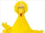 Sesame Street  Season 43 Big Bird
